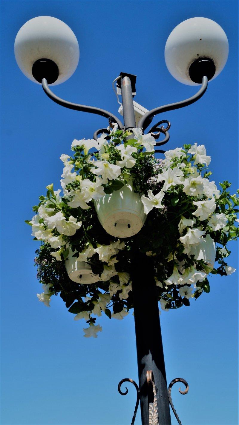 До дня міста Радивилів прикрасили квітами (ФОТО), фото-5